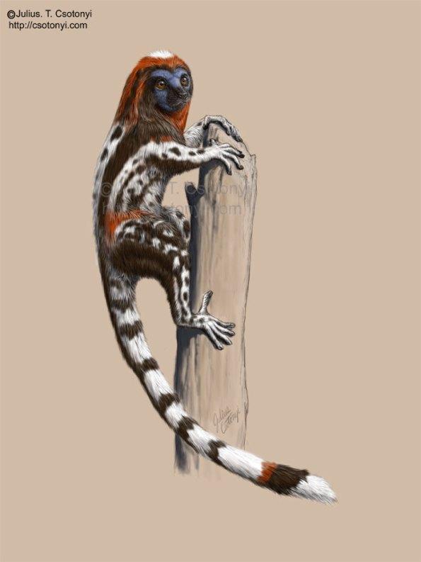 """La """"lemúrica"""" reconstrucción de Darwinius por el paleoartista Julius T. Csotonyi"""