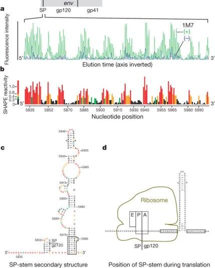 HIV-1 estudiando el genoma