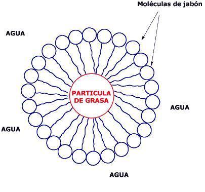 Micela formada por moléculas bipolares con grasa en el interior