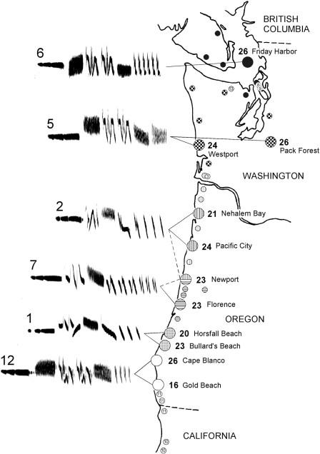Espectrogramas de los diferentes dialectos del gorrión de corona blanca en el noroeste de EE.UU.