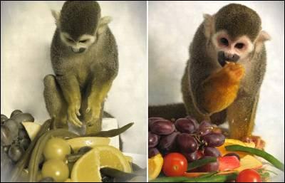 Visión del mono 'Dalton' antes (izq.) y después (drcha.) del tratamiento. - NEIZT