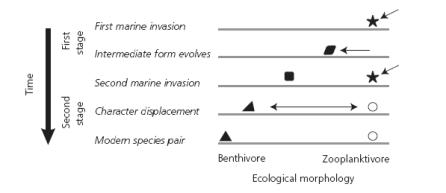 Evolución espinoso limnético y bentónico