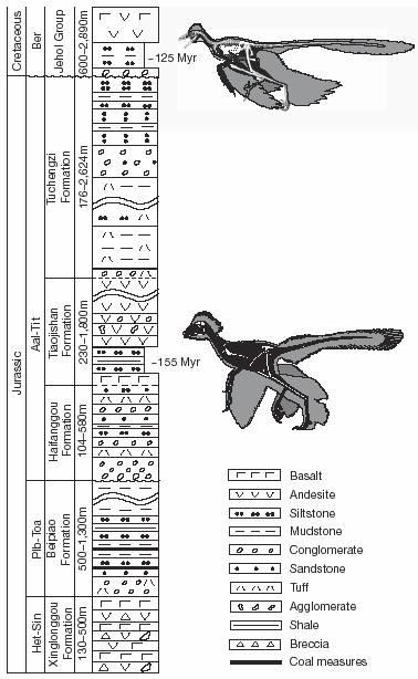 Columna en la que se encontró el <i>Anchiornis</i> (en la parte inferior), en estratos superiores se encontraron fósiles de <i>Microraptor</i> (dibujo superior)