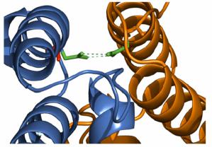 Interacción entre las proteínas Tim16 (naranja) y TimB (azul) tras la realización de una mutagénesis encaminada a estabilizar ambas proteínas en el complejo.
