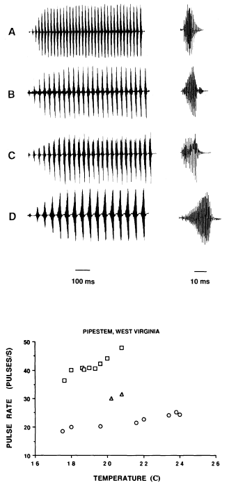 Dependencia temperatura e interespecífica en el canto en las Gray Treefrogs