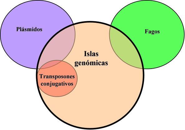 Origen islas genómicas