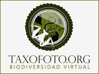 Insectarium Virtual