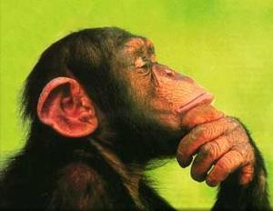 ¡Los intelectuales, deben dejar de vivir como topos incapaces de mirar al Cielo! Mono-pensando