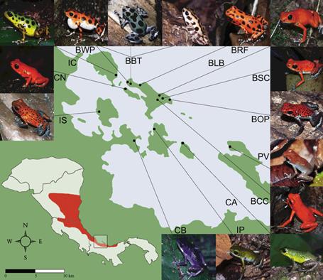 Especiación en ranas (3) Distribucion-y-patrones-de-coloracion-de-dendrobates-pumilio-reducida