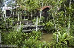 Construcción sobre pilares en un bosque pantanoso