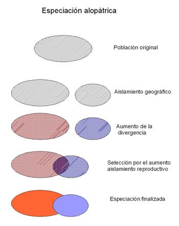 Especiación en ranas (3) Especiacic3b3n-alopc3a1trica