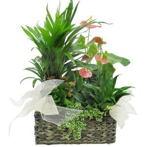 A diferencia de las plantas, los organismos heterótrofos necesitamos obtener la materia y energía de otros organismos