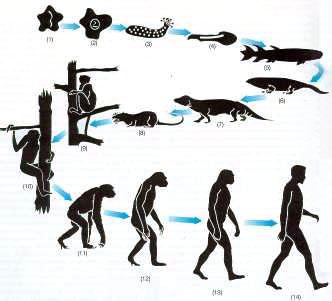 Resultado de imagen de Pequeñas mutaciones evolucionistas