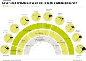 La divergencia producida por la viariación y la selección natural puede originar una gran variedad de formas