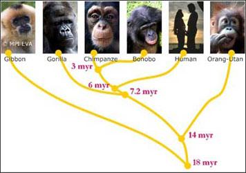 Poblaciones aisladas, divergiendo a lo largo del tiempo, llegan a producir especies diferentes, al perder la capacidad de reproducirse entre sí.