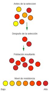 Resistencia a los antibióticos (modificado de Wikimedia Commons)