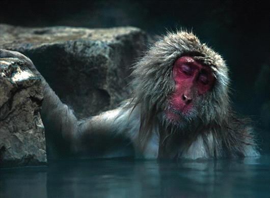 El Mono Desnudo La Ciencia Y Sus Demonios