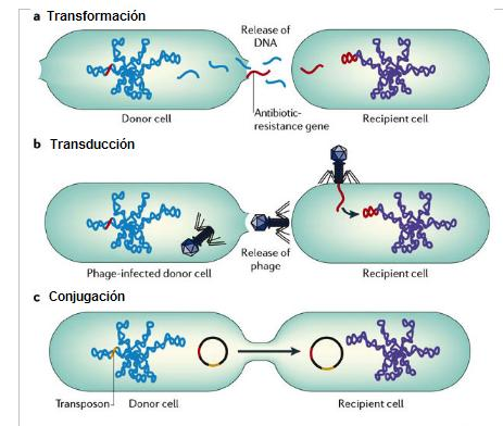 Procesos de transferencia horizontal de genes