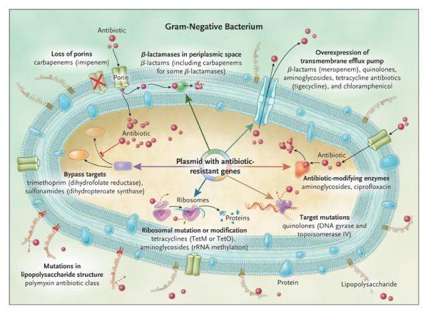 external image resistencia-antibiotica.jpg?w=600&h=440