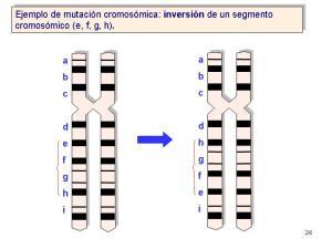 Inversión cromosómica