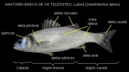 Luna, alias «Ocean Sunfish». El pez que más mola | La Ciencia y sus ...