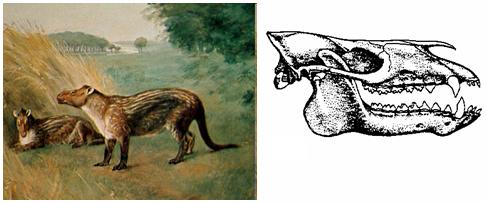 Érase una vez… (1) los Sirenios. El manatí y el dugongo ...