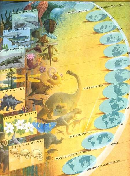Teoria de la Evolucion Sintetica Sintética de la Evolución