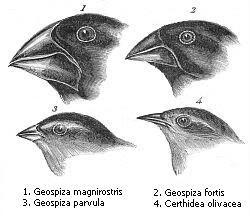 Pinzones de Darwin