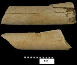 Huesos con marcas originadas muy probablemente por herramientas de piedra