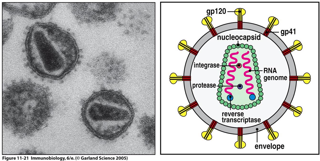 Resultado de imagen de vih molecula real de microscopio