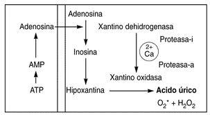 el pescado azul es bueno para el acido urico comidas que suben el acido urico alimentos que no se deben consumir por el acido urico