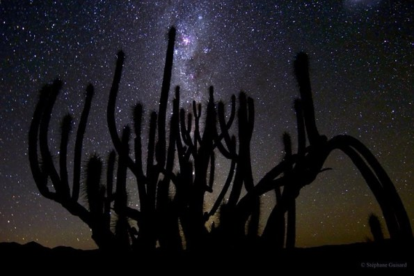 Cactus absorbiendo radiación electromagnética como un jabato
