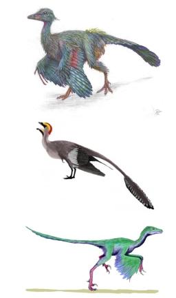 De arriba a abajo: Archaeopteryx, Jeholornis y Rahonavis.