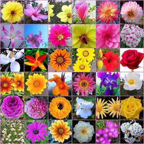 Un elaborado placebo llamado flores de bach la ciencia y for Todas las plantas ornamentales