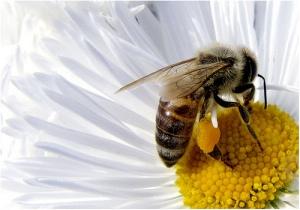 Los polinizadores cumplen un papel vital en la reproducción y evolución de las plantas con flores.