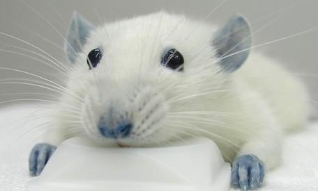 Son imprescindibles los animales de experimentación? | La Ciencia y ...