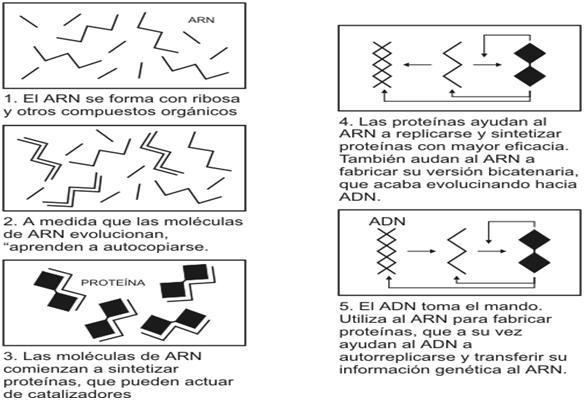Hipótesis del «mundo de ARN»