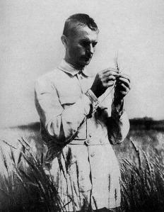Lysenko estudiando el trigo (imagen: Wikimedia Commons)