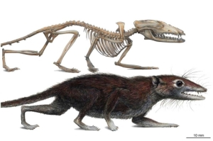 Reconstrucción de Juramaia sinensis. | M. A. Klinger|Carnegie Museum. of Natural History.