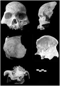 Cráneo 1 de Longlin (cada barra = cm). Imagen: Plos ONE