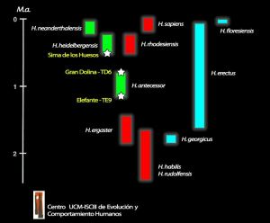 Evolución humana según el equipo de Atapuerca.