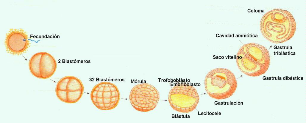 desarrollo muscular sin esteroides