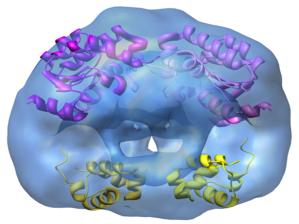 Estructura tridimensional del regulador BzdR. La imagen representa un dímero, donde se observan dos dominios de unión a DNA (parte inferior) y dos dominios de interacción con el inductor (parte superior)