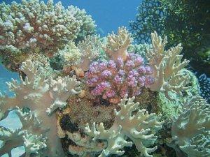 Ecologiablog_corales_01