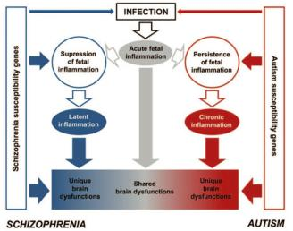 inmunidad psiquiatria infeccion virus autoanticuerpo