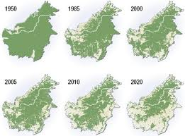 deforestacion isla borneo