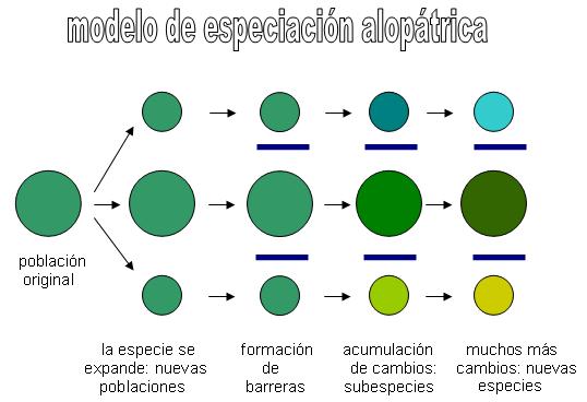 Modelo de especiación alopátrica. Crédito: Fuente Propia