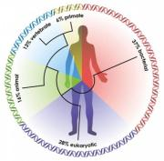 animalsandbacteria microbioma evolucion humano