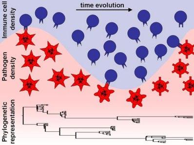 immune-response-pathogens coevolucion sistema inmune virus
