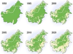 1 deforestacion-isla-borneo